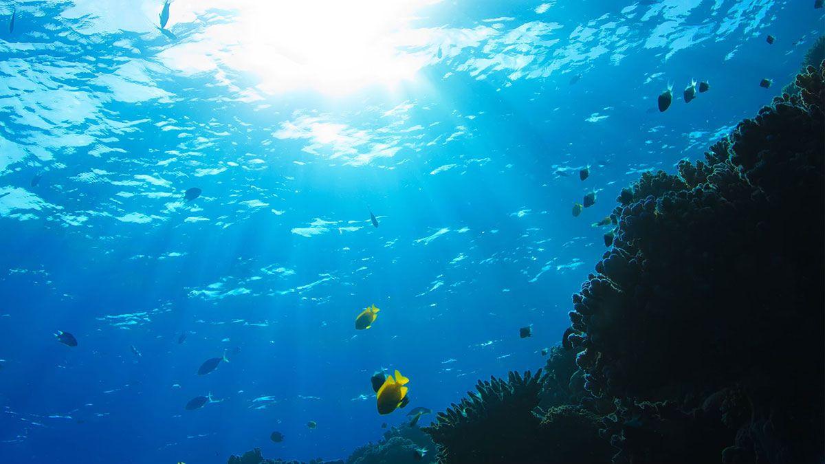 Ocean, Outre-mer, journée mondiale, 8 juin, Biodiversité